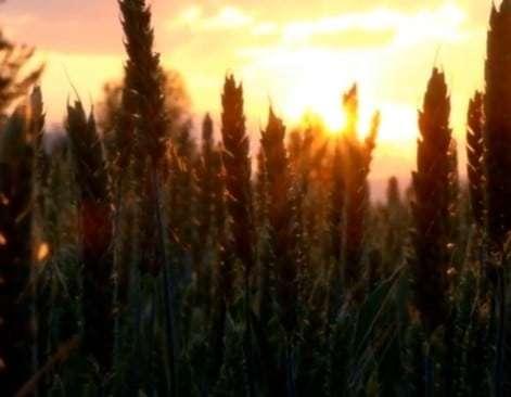 Псалом 103 (Прослава Божого милосердя)